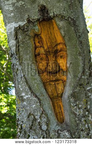 Carved face in a tree trunk. Taken in close-up in vertical format.