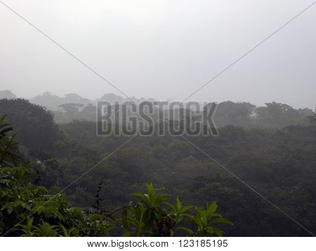 The misty rainforest in the Mexican province of Chiapas.