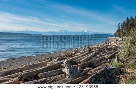 A view of the Olympic Mountains from Lincoln Park in West Seattle Washington.