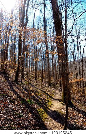 Hiking path trail in the hardwood forest.  Burst of sunlight streaming through the trees.