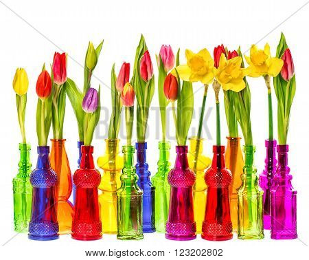 Tulip and daffodils flowers in colorful vases on white background