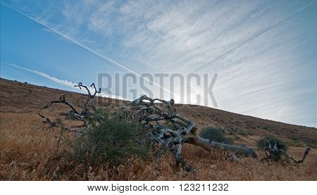 Dead Joshua Tree Cloudscape At Sunset In Palmdale California Ca
