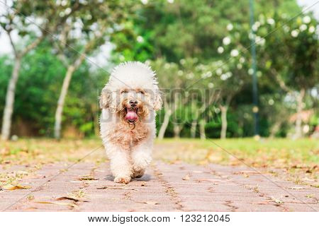 Tired Dog With Long Tongue Resting After Exercise At Park
