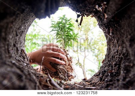 Planting To Soil Hole