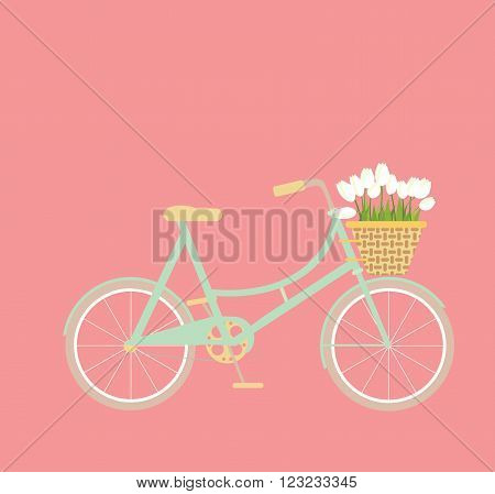 Mint bycicle with wicker basket of tulip flowers