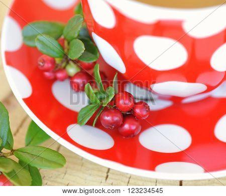 Cowberry (Vaccinium vitis idaea) tea. Close up
