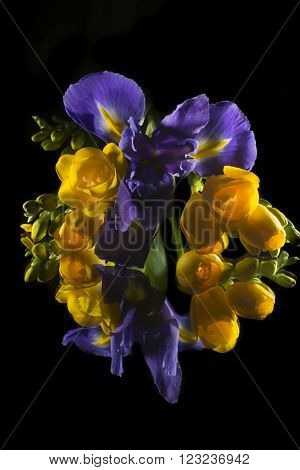 Bouquet made of freesias and iris isolated on black  background