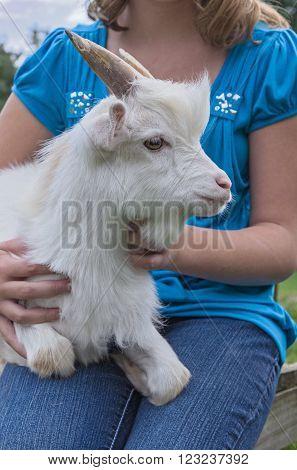 Girl Holding her Pet White Pygmy Goat