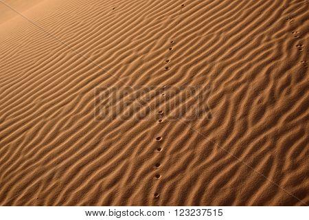 Dunes, Morocco, Sahara Desert