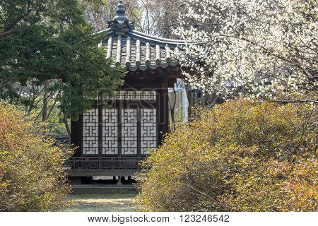 traditional korean pavilion with plum blossom tree taken during spring season.