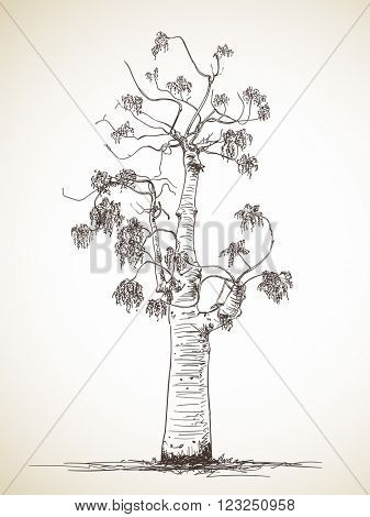 Sketch of isolated tree, Hand drawn illustration