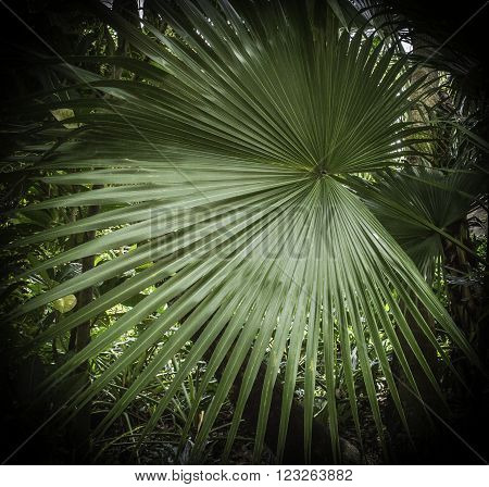 Palm Leaf in the shape of a large fan ** Note: Visible grain at 100%, best at smaller sizes