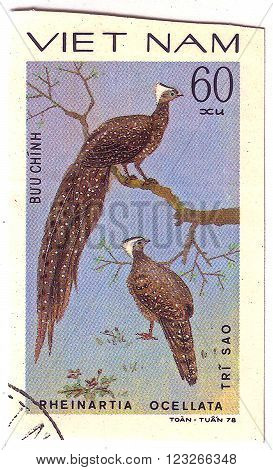 VIETNAM - CIRCA 1978 : A stamp printed by Vietnam shows bird an Pheinartia Ocellata, from the series Ornamental bird , circa 1978.