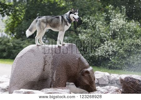 dog on the back of a bear