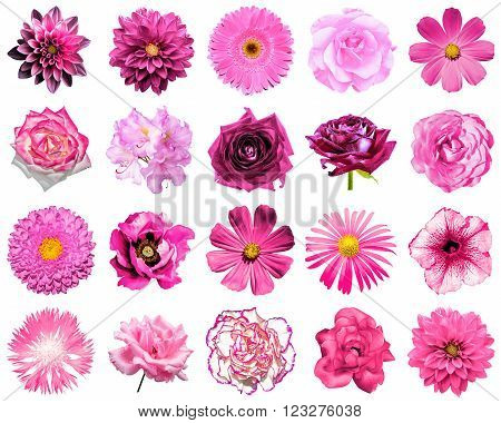 Mix Collage Of Natural And Surreal Pink Flowers 20 In 1: Peony, Dahlia, Primula, Aster, Daisy, Rose,