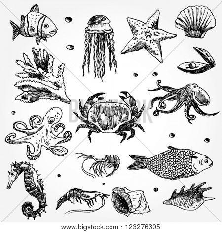 Some Sea Animals Hand Drawn