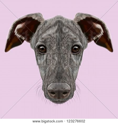 Cute face of dark brindle domestic dog on pink background
