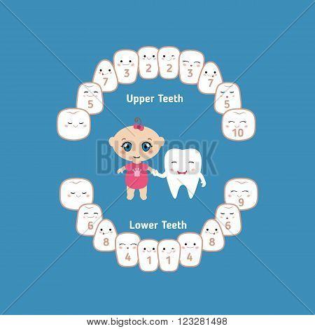 Temporary teeth. Illustration of baby teeth and a baby girl holding a hand cartoon tooth.