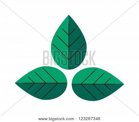 Flat leaves natural organic fresh element and flat leaves spring tree symbol. Flat leaves nature plant. Flat leaves herb element. Leaves green design. Flat leaves green plant eco vector illustration.