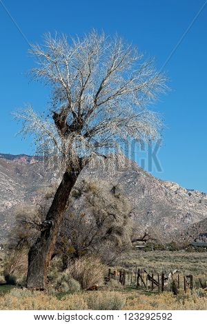 Tree on Walker Pass near Lake Isabella in the southern Sierra Nevada mountains in Central California USA