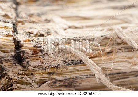 asbestos chrysotile fibers that cause lung disease COPD lung cancer mesothelioma
