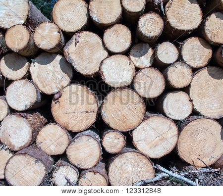 Logs crosscuts on the timber cutting in the forest ** Note: Soft Focus at 100%, best at smaller sizes