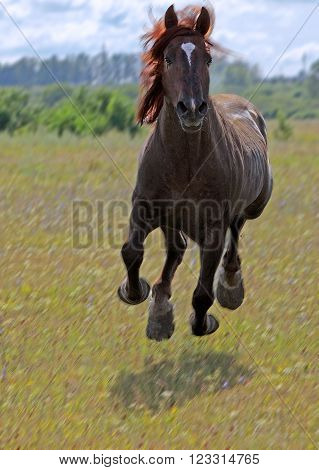 a large prancing stallion on green forest glade