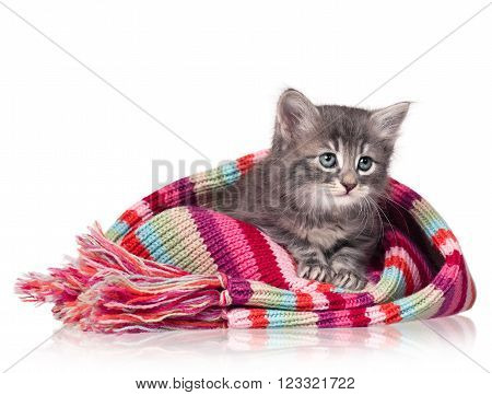 Cute little kitten in a warm knitted scarf isolated on a white background