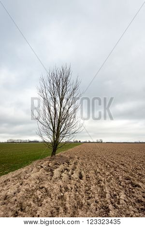 A bare tree stands exactly on the border between the sown field and the plowed land. It's the first spring day of the new season but the sky is overcast.