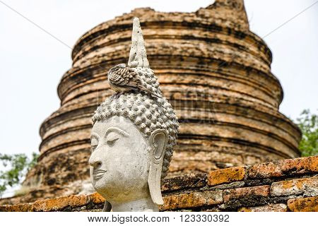 the Buddha Statue in thailand and bird at the head of the Buddha statue