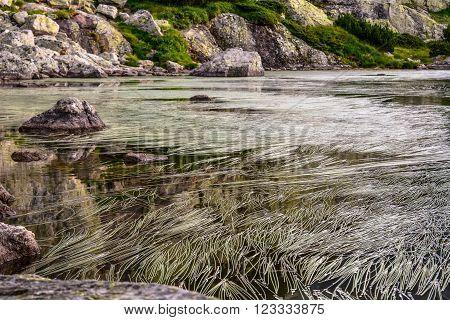 Harmony Duckweeds in the secound of the Seven Rila lakes, Bulgaria