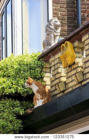 There are statue of a lion stone clogs and live cat - all that is needed for the charms of the Dutch house.