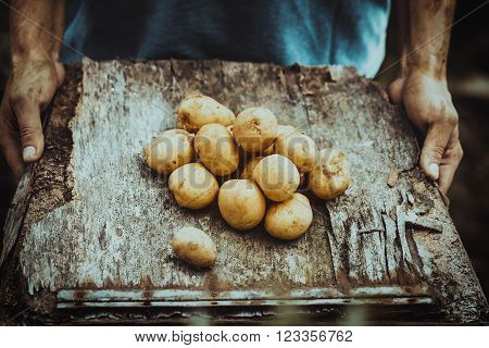 Organic vegetables. Farmers hands with freshly harvested vegetables. Fresh bio potatoes