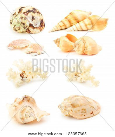 Sea Shells Isolated On A White, Collage