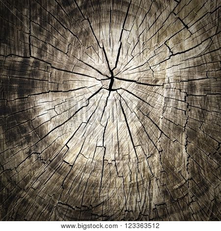 Wood cut texture background.