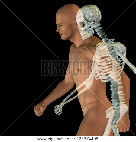 3D illustration human man or male 3D conceptual anatomy with bones or skeleton and face or skull details isolated on background