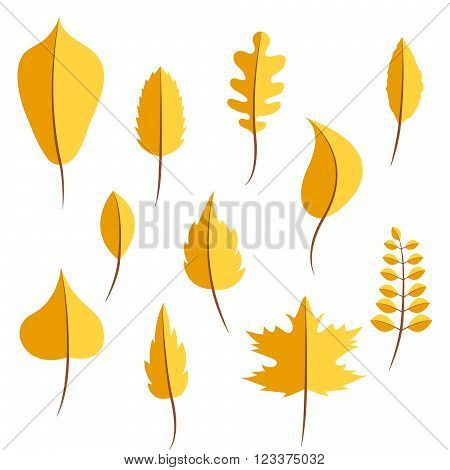 Autumn yellow withered leaves in flat style vector set. Oak leaf, chestnut leaf, maple, birch and acacia leaves.