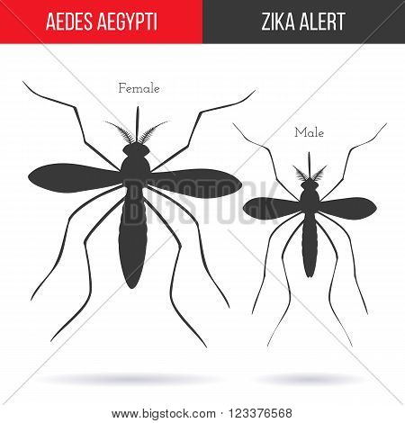 Zika alert banner poster or flyer with male and female aegypti aedes mosquitoes silhouettes. High quality graphic design elements isolated on white background with shadow. Healthcare concept.