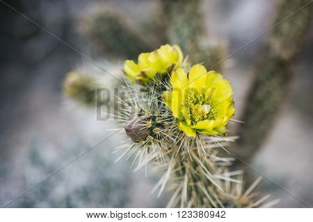 Desert Plant In Anza-borrego State Park, California, Usa