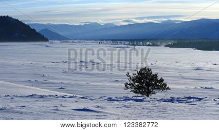 Solitary tree in snowfield in front of Grand Tetons mountain range in Wyoming USA