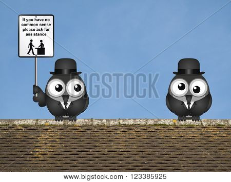 Comical common sense sign with birds perched on a rooftop against a clear blue sky