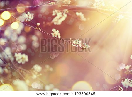 Spring border or background art with blossom. Beautiful nature scene with blooming tree and sun flare. Sunny day. Spring flowers. Beautiful Orchard. Abstract blurred background. Springtime