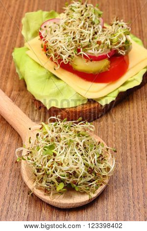 Alfalfa and radish sprouts on wooden spoon and freshly prepared vegetarian sandwich lying on wooden table concept of healthy lifestyle diet food and nutrition
