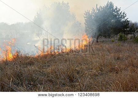 Stubble burning in meadow. Transylvania region Romania