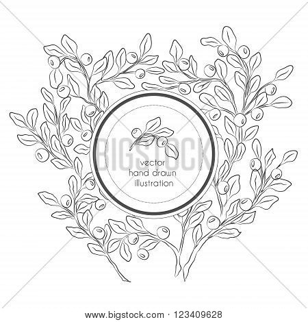 Vector hand drawn black and white illustration with blueberries branches with leaves and berries and circle label