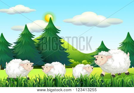 Sheeps living on the farmyard illustration