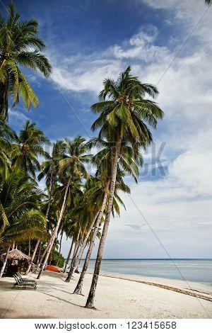 Tropical white sand beach Bohol Island Philippines
