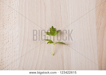Leaf of lovage on wooden background
