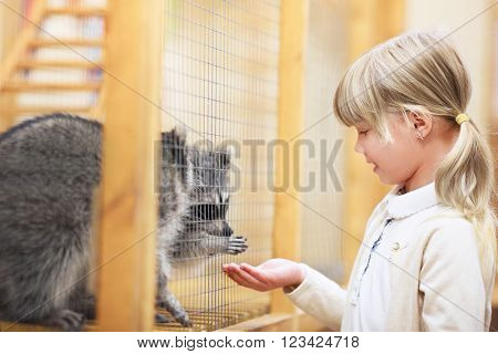 Little girl with raccoon in zoo