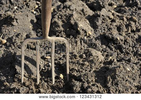 Soil preparation by digging with a garden fork.